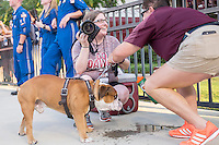 Game Day: MSU Football versus South Carolina.<br /> Photographer documents the bulldog drinking water<br />  (photo by Robert Lewis / &copy; Mississippi State University)