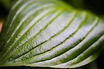 Leaf at Mt Tomah Botanical Gardens, Blue Mountains, Sydney, NSW, Australia