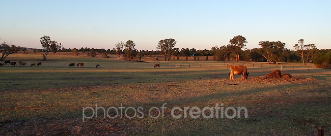 Rural Landscape - Murrumbidgee Irrigation Area, NSW