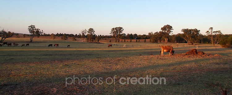 Rural Landscape - Murrumbidgee Irrigation Area, NSW