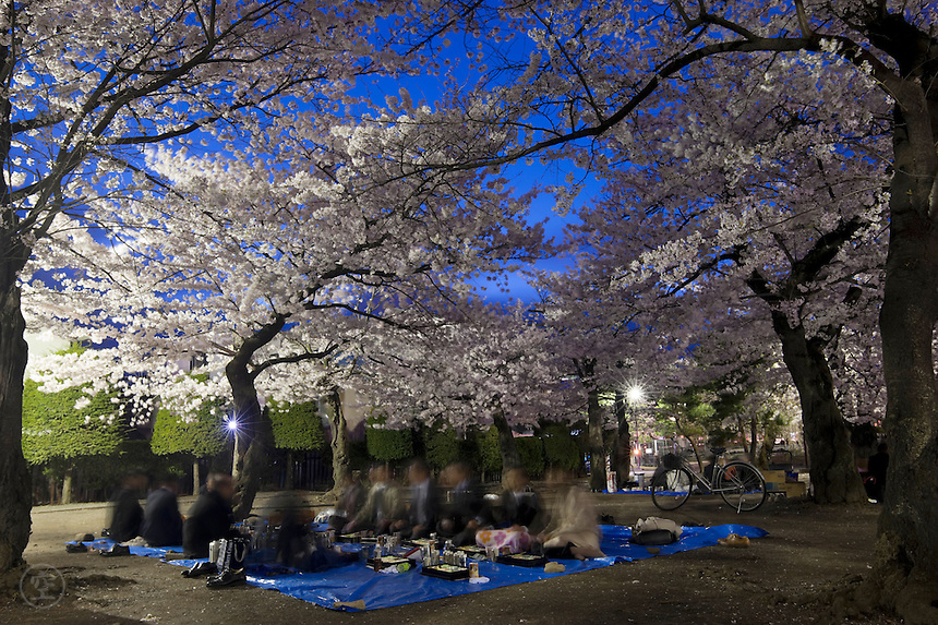Without wine, even <br /> Beautiful cherry blossoms <br /> Have small attraction. - Anonymous<br /> <br /> Night Cherry Blossom Party, under the flowering sakura trees in Matsumoto.<br /> <br /> (title translation by Daniel C. Buchanan)