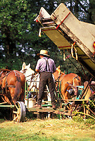 Amish man driving horse team with farm equipment. Amish man. Strasburg Pennsylvania USA Lancaster County.
