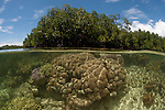 Split level of a shallow coral reef and mangroves. North Raja Ampat, West Papua, Indonesia