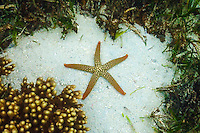 Starfish on the Great Barrier Reef