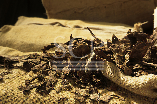 Cachoeira, Bahia State, Brazil. Shreds of tobacco on hessian sacking; Dannemann cigar factory.