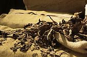 Cachoeira, Bahia State, Brazil. Shreds of tobacco on hessian sacking; Dannemann cigar factory.