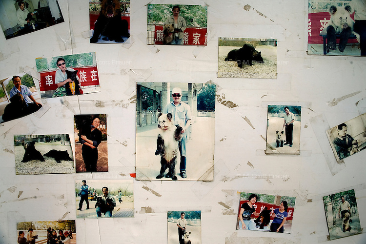 Photos of tourists posing with a captive bear hang on a wall near a bear enclosure at the Tianjin Zoo in Tianjin, China.