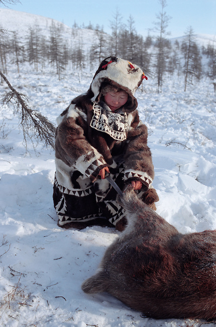 Olga, an Even woman, skins a reindeer at her family's winter pastures in Northern Evensk, Magadan Region, E. Siberia, Russia