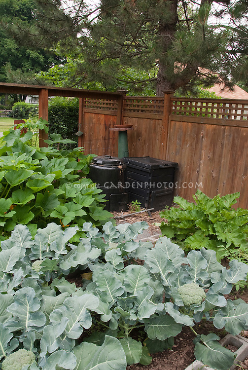 Two types of plastic compost bins in the back of the vegetable garden, with broccoli, fence