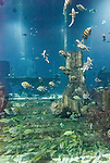 Aquarium in shopping mall, Dubai, United Arab Emirates