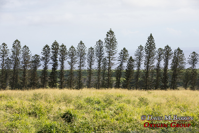 Scenic Spot NEar Haleocane