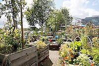 Nederland  Amsterdam 2016 . Shaffy's Tuin aan het Oosterdok. De Tuin is geïnspireerd op de vrijgevochten zanger Ramses Shaffy die in de jaren zeventig op een boot op de Dijksgracht woonde. Het is een tuin voor de buurtbewoners. Foto Berlinda van Dam / Hollandse Hoogte