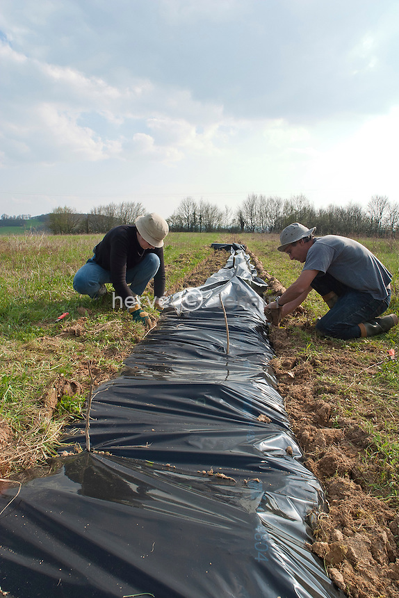 Paillage plastique pour la plantation d'une haie // Plastic for the plantation of a  a hedge