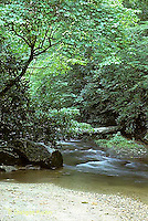 WF09-003z  Stream - Pisgah National Forest, NC