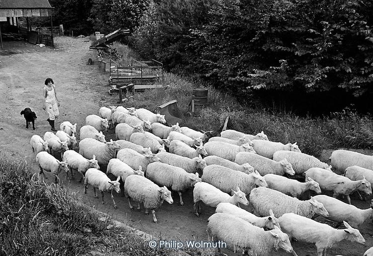 Cwm Farm, Peterchurch, Herefordshire, 1988.