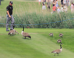 Graeme McDowell giving way to the wildlife on the 13th fairway on day three of the Celtic Manor wales Open 2010.Picture Fran Caffrey/Newsfile.ie