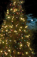 Christmas lights adorn a Christmas Tree as the moon rises overhead in McAdenville, NC. The quiet little town of McAdenville, which lies along the South Fork River in Gaston County, N.C., comes alive in spectacular fashion each year as Christmas draws near.  Almost overnight, the small textile town is transformed into Christmas Town, USA.