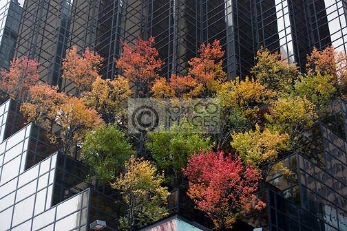 ROOFTOP TERRACED  GARDEN TRUMP TOWER FIFTH AVENUE MIDTOWN MANHATTAN NEW YORK CITY USA