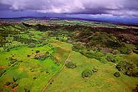 The lush green fields of Kapoho on the Puna Coast.