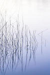 Reeds, Lake Penland, Oregon