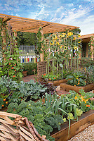 Food garden, raised beds, sunflowers, trellis, blue sky