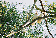 Image Ref: A123<br />