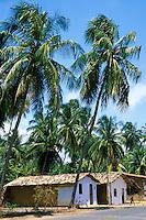 Roadside village houses with coconut trees, Porto de Pedras, Alagoas, Brazil