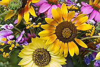 Helianthus sunflowers cut flowers vase