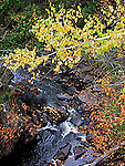 Trout stream in autumn colour, Renfrew County, Ontario<br />