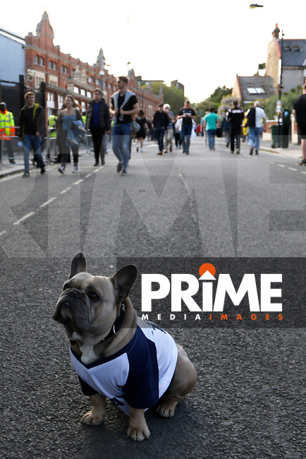 A french bulldog poses outside Craven Cottage during the Sky Bet Championship play off semi final 2nd leg match between Fulham and Derby County at Craven Cottage, London, England on 15 May 2018. Photo by Carlton Myrie / PRiME Media Images.
