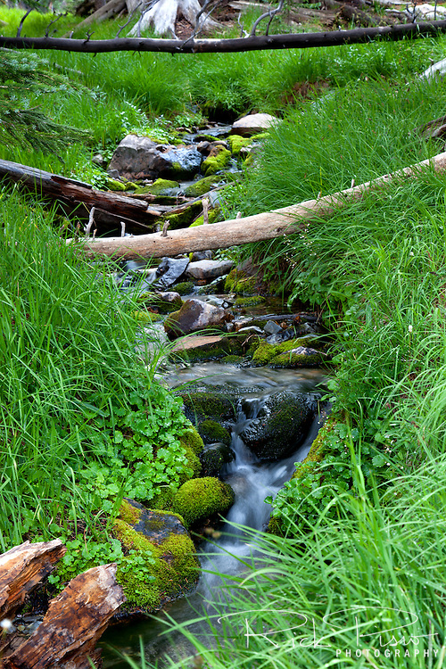 A small creek flows from alpine lakes near Wheeler Peak in Great Basin National Park.