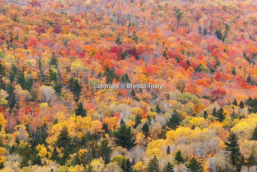 Colorful leaves of decidious trees mix with conifers creating a contrast of Autumn hues in Keewenaw Peninsula, Michigan.