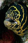 Eels/Morays