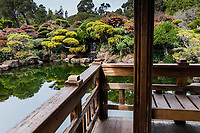 The view of the scuplted shore and waterfall from the platform over the koi pond at the Japanese Gardens in Hayward, California.