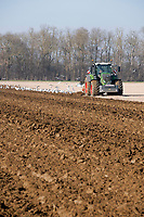 Ploughing over winter stubbles in preparation for sugar beet drilling<br /> &copy;Tim Scrivener Photographer 07850 303986<br />      ....Covering Agriculture In The UK....