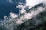 Fog created by a summer storm hovers over a forest of spruce and fir trees, San Juan Nat'l Forest, CO