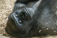 Kiki & Baby Kambiri & Family Franklin Park Zoo