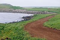 Northern Fur Seals on the shores of St. Paul Island, Pribilof Islands, Alaska.