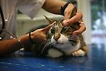 Veterinarian examining a cat in a clinic, Netherlands