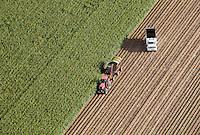 Harvesting corn, Pueblo County, Colorado. Sept 2011
