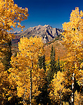 Autumn aspens,  Mt. Timpanogos, Provo Peak, Wasatch Mountains
