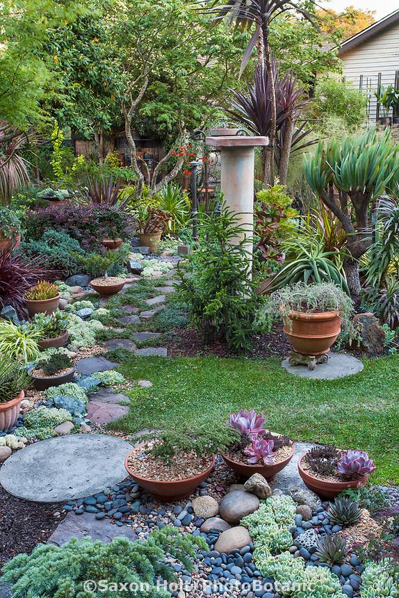 California plant collector garden - Carol Brant