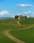 The Palouse, Whitman County, WA: Farm shed with trees on hilltop above rolling wheat fields and curving dirt road