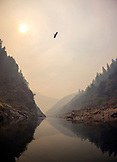 USA, Oregon, Wild and Scenic Rogue River in the Medford District, an osprey flies over the Rogue River