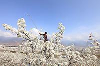 Hand Pollination China