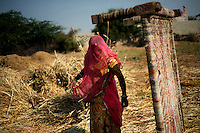 Bishnoi woman works in a field at Guda Bishnoi village near Jodhpur in Rajasthan, India. Arindam Mukherjee