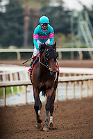 ARCADIA, CA - FEBRUARY 04: Royal Moe #1, ridden by Victor Espinoza returns after winning the Robert B. Lewis Memorial Stakes at Santa Anita Park on February 4, 2017 in Arcadia, California. (Photo by Alex Evers/Eclipse Sportswire/Getty Images)