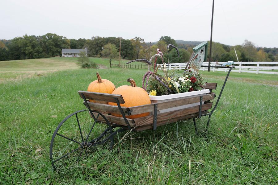 autumn fall arrangement in Albemarle County, Va, Virginia. Photo/ Andrew Shurtleff
