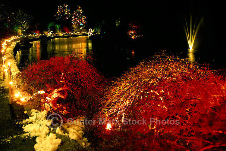 Vancouver, BC, British Columbia, Canada - Christmas Lights on Trees at VanDusen Botanical Garden