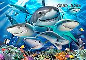 Howard, SELFIES, paintings+++++,GBHR894A,#Selfies#, EVERYDAY ,sharks,maritime